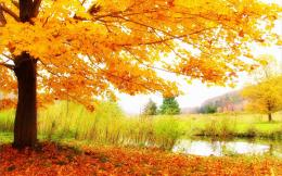 Orange Autumn HD Wallpapers 434