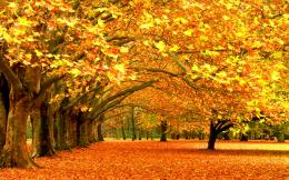 Orange Autumn HD Wallpapers 1196