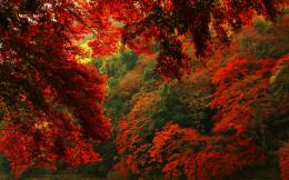 Description: The Wallpaper above is Red autumn forest hd Wallpaper in 683