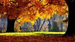 fall wallpapers 1080p fall wallpapers 1080p fall wallpapers 1080p 941
