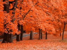 natural autumn fall trees hd x wallpapers natural autumn fall trees hd 1111