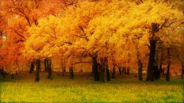 Fall HD Wallpapers 1049