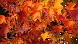 Full View and Download fall colors Wallpaper with resolution of 276