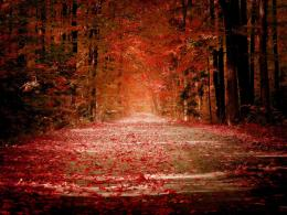 autumn wallpaper widescreen autumn forest wallpaper autumn wallpaper 1046