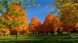 Orange Autumn HD Wallpapers 1838