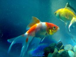 108557 fish wallpaper desktop fish wallpaper desktop picture jpg 1437