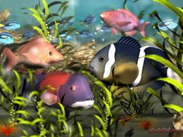 beautiful colorful fish 257