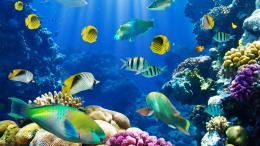 Live Fish BackgroundsHD Wallpapers 1817