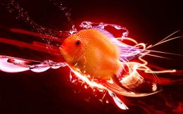 Homepage » Animals » Fish » Fish Desktop Wallpaper 1665