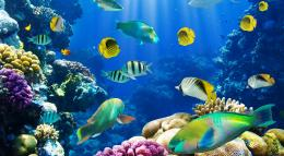 free fish hd desktop hd wallpapers 1319