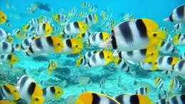 Tropical Fish Desktop WallpaperHD Wallpapers 332