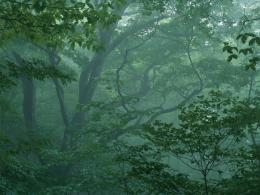 forest mist fog HD Wallpaper of Nature & Landscapes 1089