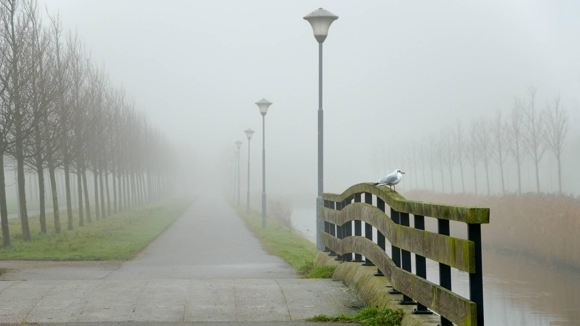 Fog HD Wallpapers 279