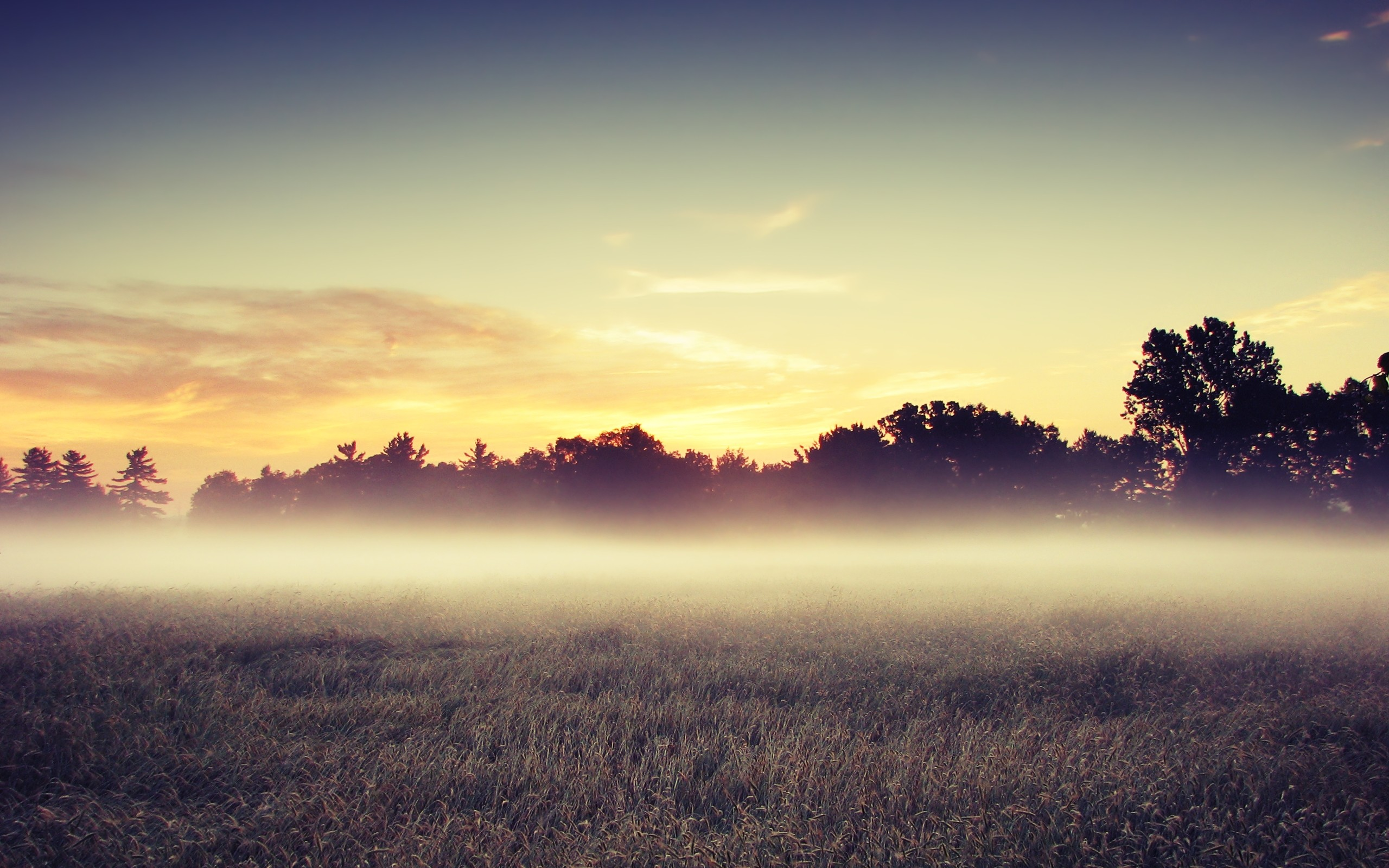 Download: Morning Mist HD Wallpaper 622