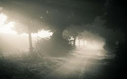 Fog Road Lights HD Wallpaper 827