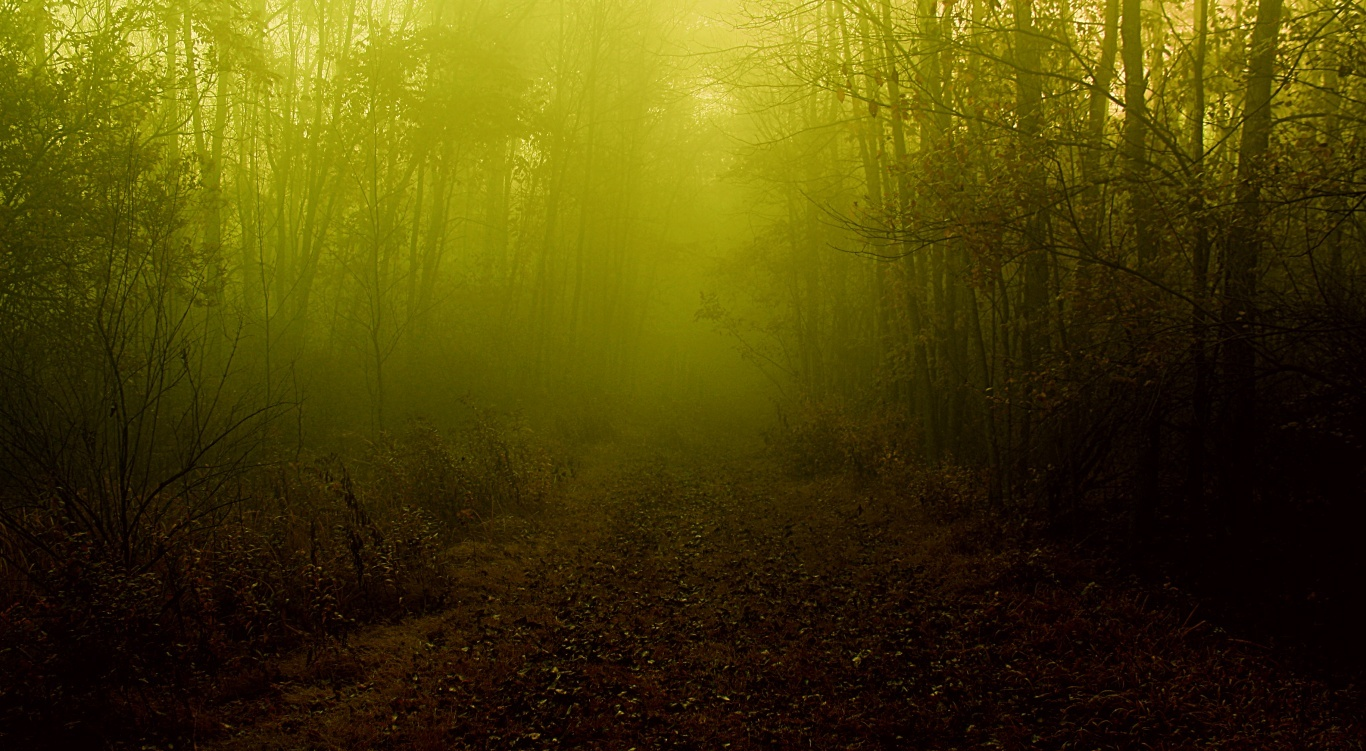 Wallpaper: the fog that never ends hd wallpapers 865