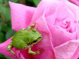 Frog Wallpapers | Desktop Wallpapers 608
