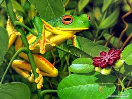 Frogs Frog Wallpaper! 1822