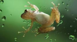 Tagged with: Frog Desktop Wallpapers 669
