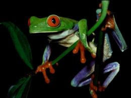 Frog Wallpapers 1682
