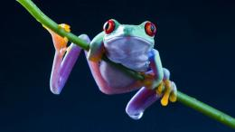 1920x1080 wallpapers artistic cute frog hd wallpapers wallpaper 2013 809