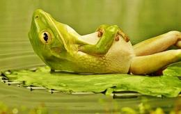 lounging frog best funny wallpapers share this free funny wallpaper on 166