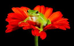 Coders Wallpaper Abyss Explore the Collection Frogs Animal Frog 340983 341