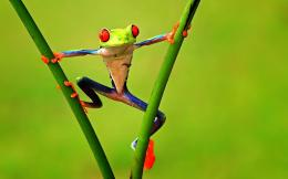 Frog HD Desktop Wallpapers 855