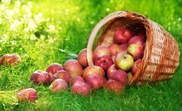 Fruits apple hd wallpapers 242