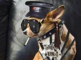 funny hd wallpapers dog funny hd images dog funny hd wallpaper 1692