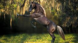 funny horse top photo funny little horse horse funny image horse funny 1083