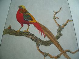 Golden Pheasant Birds HD Wallpapers 1403