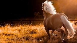 Beautiful Horse Hd Wallpapers 2013 1072