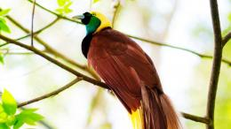 Greater Bird Of Paradise Wallpaper 715