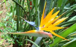 Bird of Paradise wallpapers hd 641