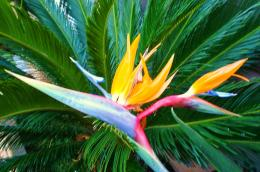 Bird of Paradise wallpapers hd 979
