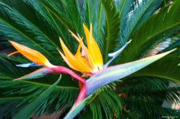 Bird Of Paradise, Pictures, Photos, HD Wallpapers 1135