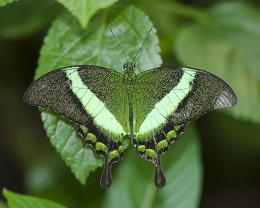 Beautiful green butterfly pretty insect 1544