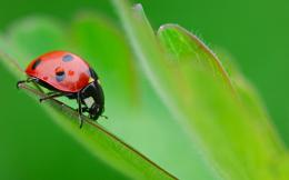HomeWallpapersPhotographsMacroAnother ladybird 1767