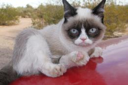 Grumpy Cat Sitting On Red Car Wallpaper 540x360 Grumpy Cat Wallpaper 125