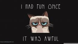 Grumpy Cat wallpapers 1144