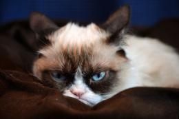 grumpy cat hd desktop wallpaper download this wallpaper for free in hd 707