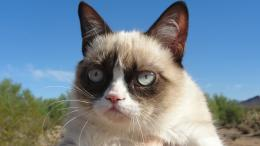 HD Wallpaper 1920x1080 Grumpy cat HD Wallpaper 1920x1200 Grumpy cat HD 1787