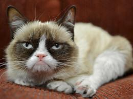 Grumpy Cat pictures jpg 260