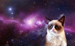 Grumpy Cat Pictures & HD Wallpapers 1084