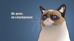 Grumpy Cat Cartoon Background HD Wallpaper of Animals 1812