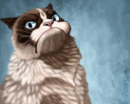 grumpy cat mornings hd cat anime chibi cat eyes wallpaper pet 987