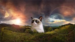 Grumpy Cat Pictures 1821