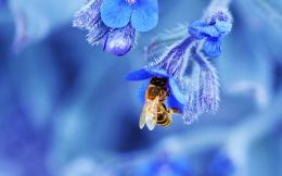 honey bee desktop wallpaper honey bee insects images honey bee 675