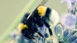 Honey bee workers 07 Wallpapers 504